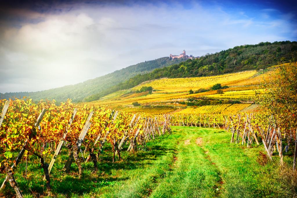 Top 5 des spots de running en France