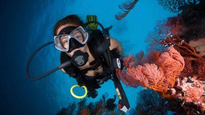 3 destinations de rêve pour un baptême de plongée