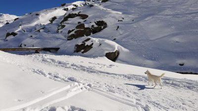 Découvrir Val Thorens : un séjour à ski vibrant !